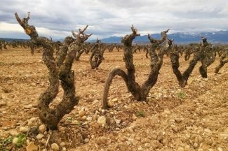 Alquiler de coche en La Rioja
