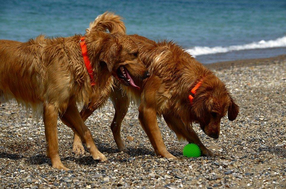 Playas para perros en España: ¡Báñate con tu mejor amigo!