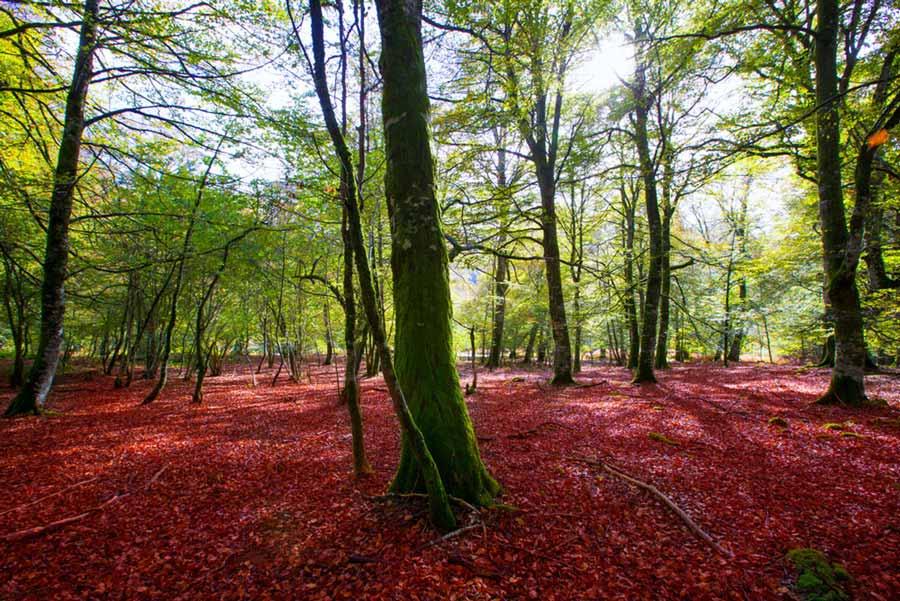 Viajar en coche en otoño: ¿Dónde quieres ir?
